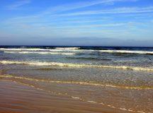 One million sea birds die in warm Pacific Ocean