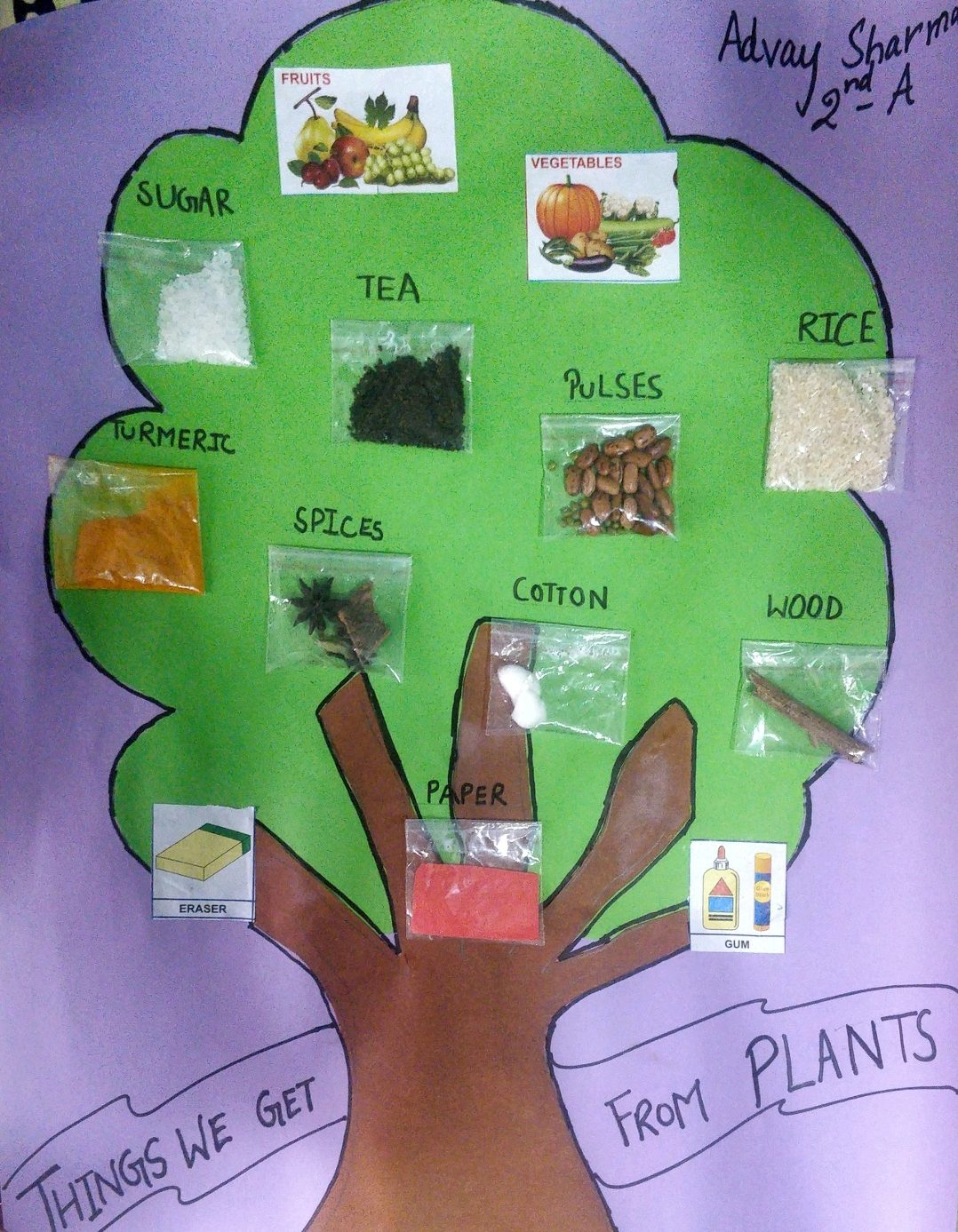 Image Depicting Benefits of Trees