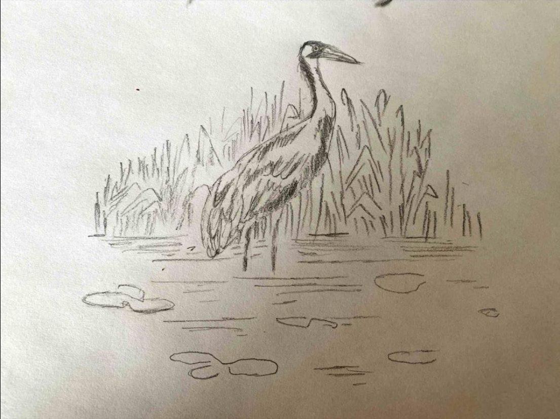 Image depicting Bird