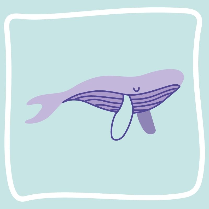 Image depicting whale. humpback whale