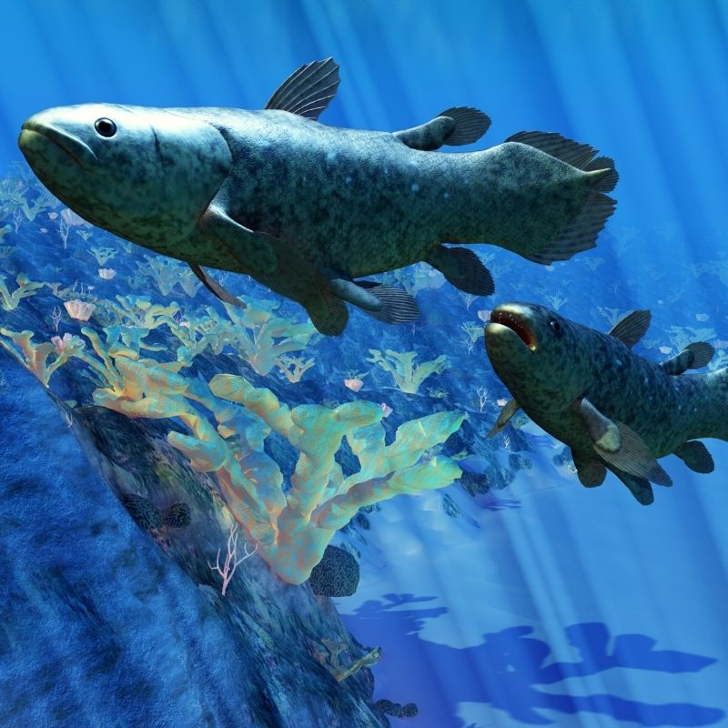 """Image depicting """"Living fossil"""" fish that can live up to 100 years, coelacanth, curious times"""