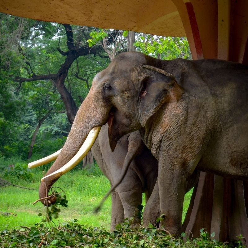 Image depicting elephants, as in, Elephant guides friend who cannot see