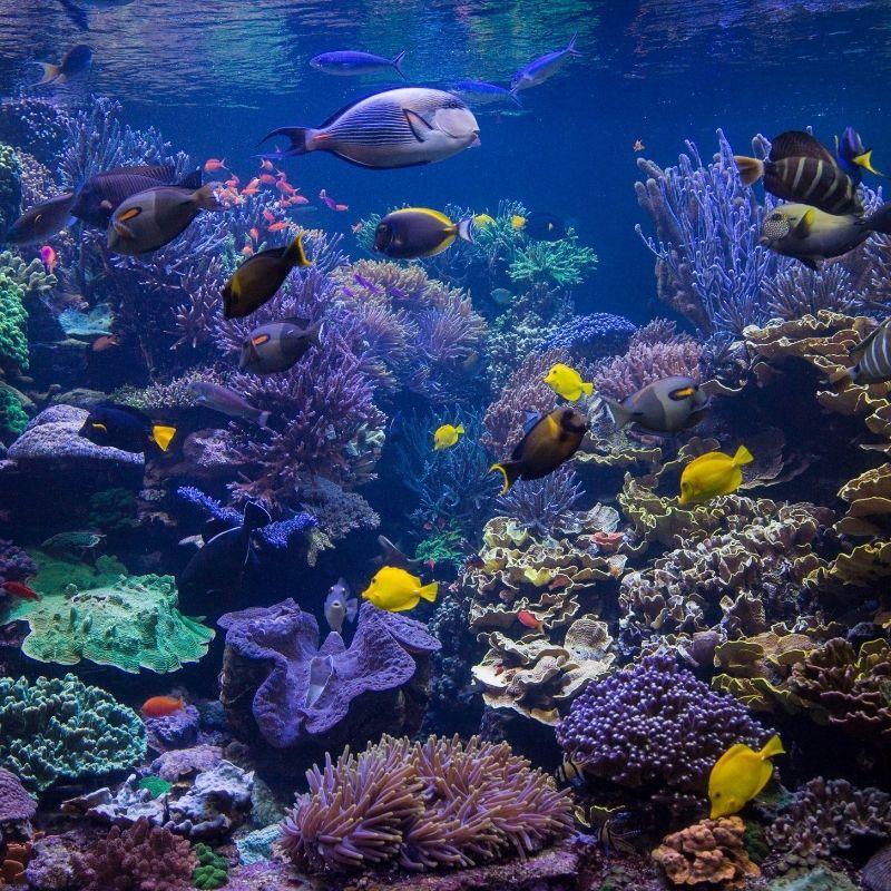 Image depicting underwater farm, as in, World's first underwater farm 'Nemo's Garden' reopens