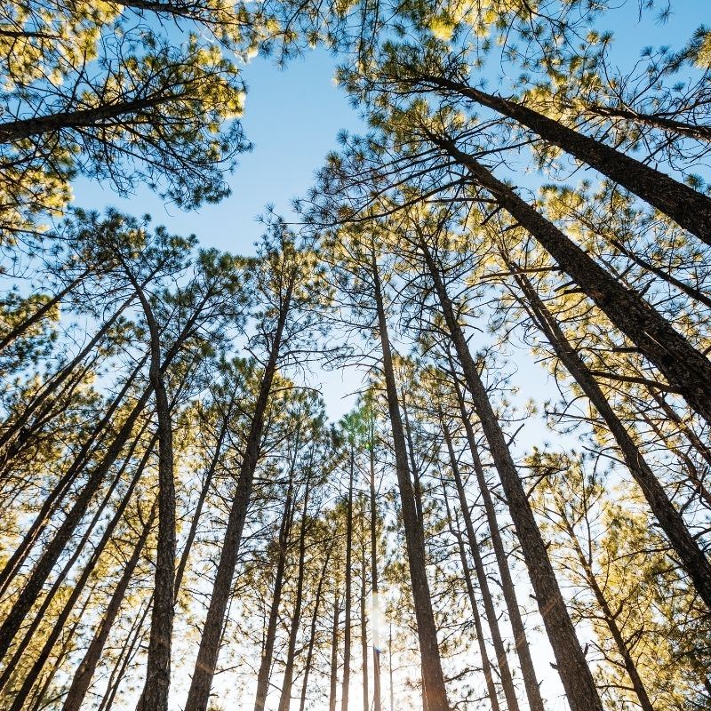 Image depicting trees, as in, Spending time among trees helps kids' brains grow