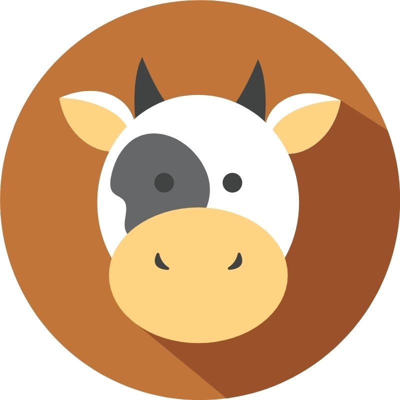Image depicting cow as in Say hi to the famous dwarf cow, Rani