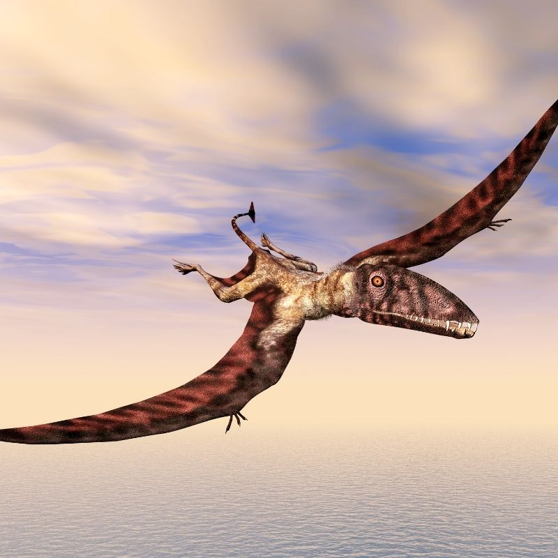 Image depicting 160-million-year-old 'winged lizard' fossil found in Chile